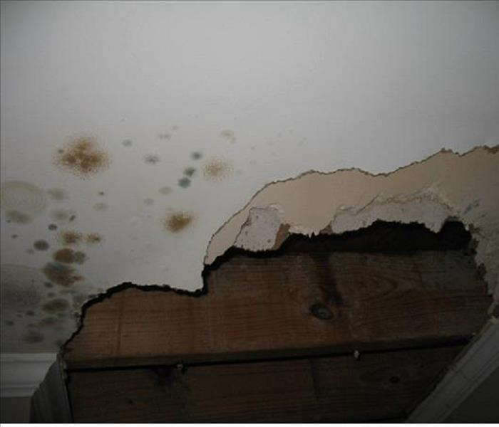 White drywall with mold on it and a section of drywall ripped away