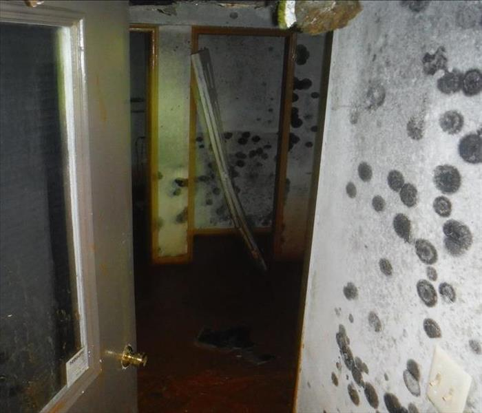 Mold Remediation Why you should hire a professional Mold Remediation Specialist?